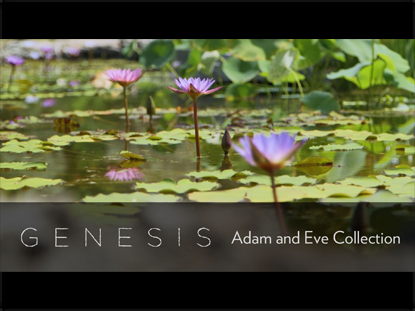 GENESIS: ADAM & EVE COLLECTION