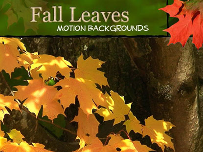 FALL LEAVES MOTIONS