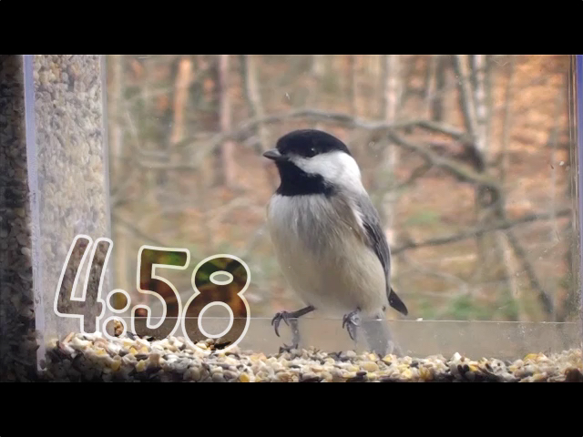 BIRD FEEDER COUNTDOWN