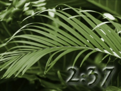 GREEN PALM COUNTDOWN