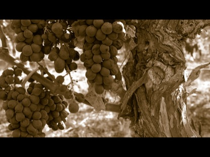 PARABLES: THE VINEYARD WORKERS