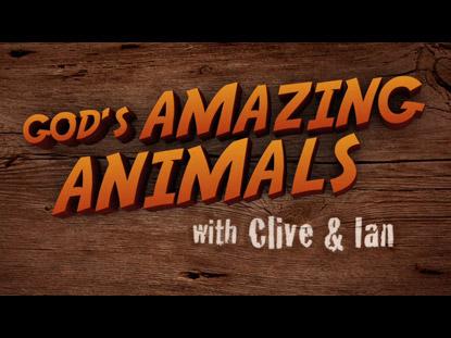 GOD'S AMAZING ANIMALS 3 IGUANAS