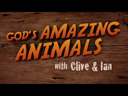 GOD'S AMAZING ANIMALS 5 ANTEATERS