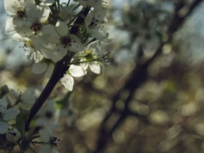 SPRING BLOSSOMS ONE