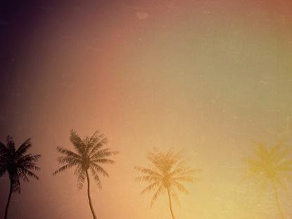 LOOP SUMMER PALM MANY TREES