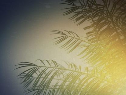 LOOP SUMMER PALM SINGLE TREE
