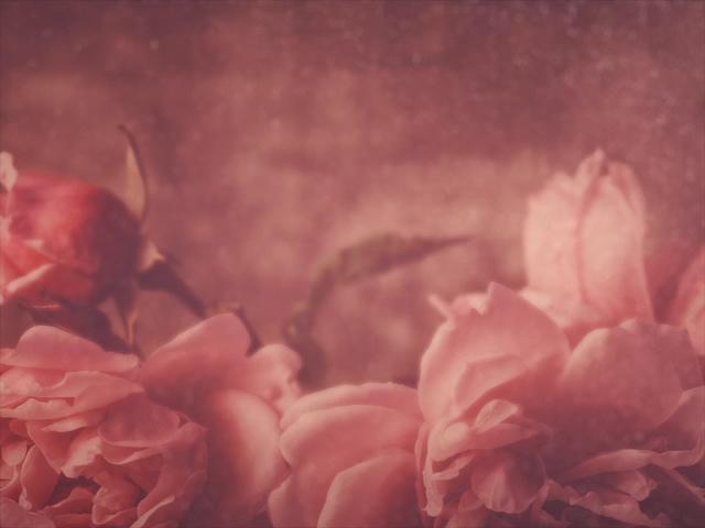 ELEGANT FLOWERS 05