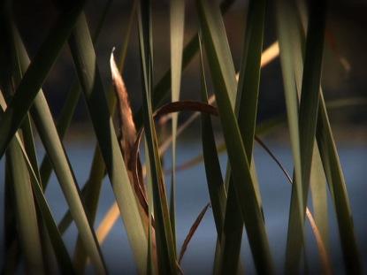 FIELD GRASS MOTION 2