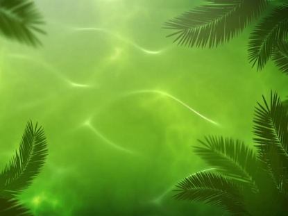 The gallery for --> Waving Palm Branches