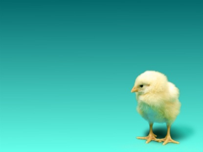 BABY CHICK EASTER BLUE