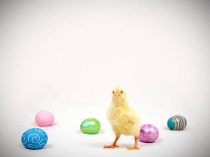 BABY CHICK EASTER EGGS