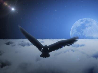 EAGLE SOARING CLOUDS NIGHT