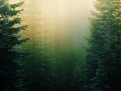 calming nature green 1 motion playback media