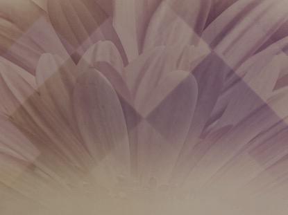 PASTEL FLOWER 2 MOTION