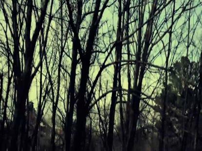 TREE GRUNGE WARM