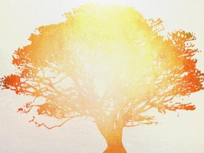 TREE OF LIFE ORANGE 1 MOTION