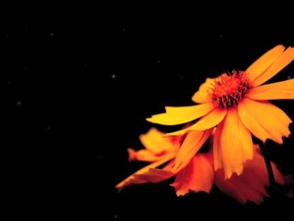 GRUNGE FLOWER 2