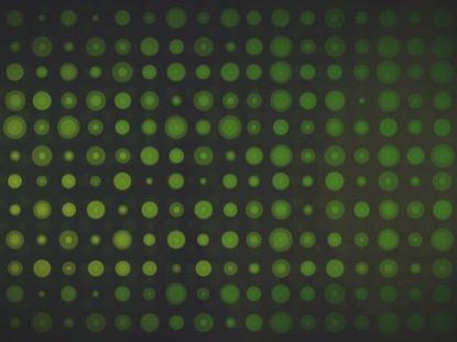 CIRCLE GRID GREEN
