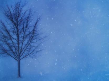 BARREN WINTER TREE