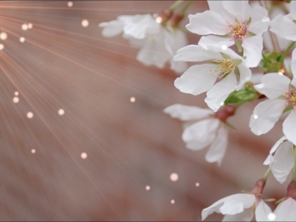 SPRING FLOWERS WORSHIP BACKGROUND