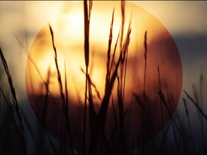 SUMMER SUNSET TALL GRASS