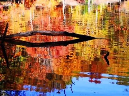 AUTUMN LAKE AND LOGS