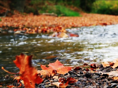 AUTUMN SHIMMERING STREAM