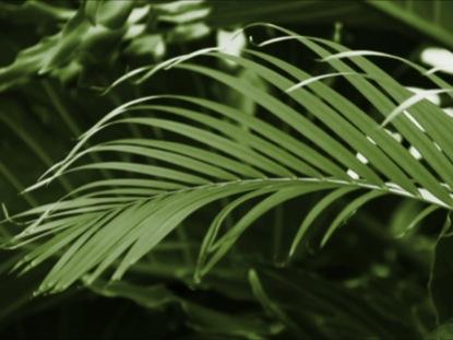 GREEN PALM LOOP