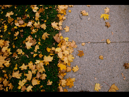 LEAVES CEMENT GRASS