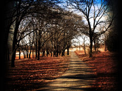 FALLEN LEAVES UPON A PATH