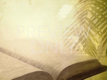 PALM SCRIPTURE STILL
