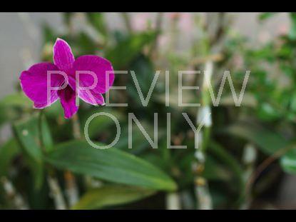 THAI FLOWER 2