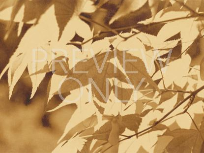 GOLDEN HARVEST LEAVES-STILL