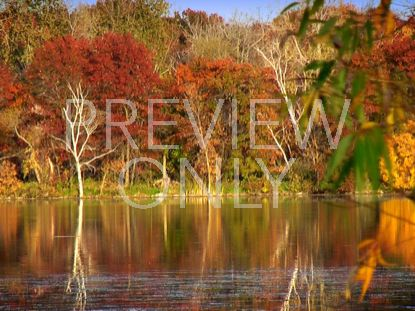 FALL FOOTAGE AUTUMN LAKE