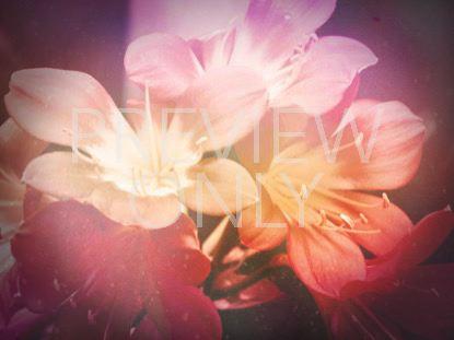 FLOWERS FOR MOM 1 STILL