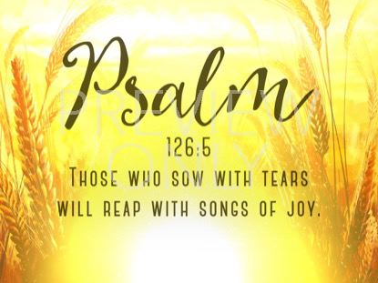 HARVEST SOWING PSALM STILL