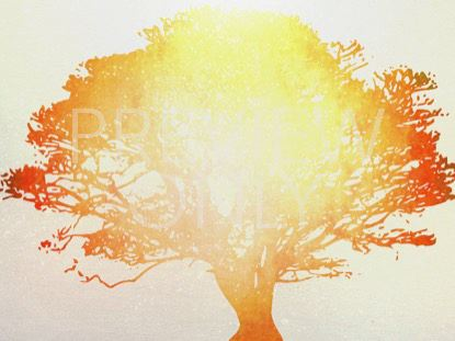 TREE OF LIFE ORANGE 1 STILL