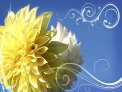 FLOWER FLOURISHES