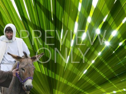 PALM SUNDAY STILL 4