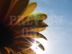 FLOWER AND SUN FLARE