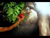 The Tree Of Life | Vision Video Inc. | Preaching Today Media