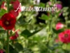 Blossoms Breeze Announcements Cinemagraph | Beau Reve Media | Preaching Today Media