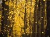 Autumn Golden Trees | Videos2Worship | Preaching Today Media