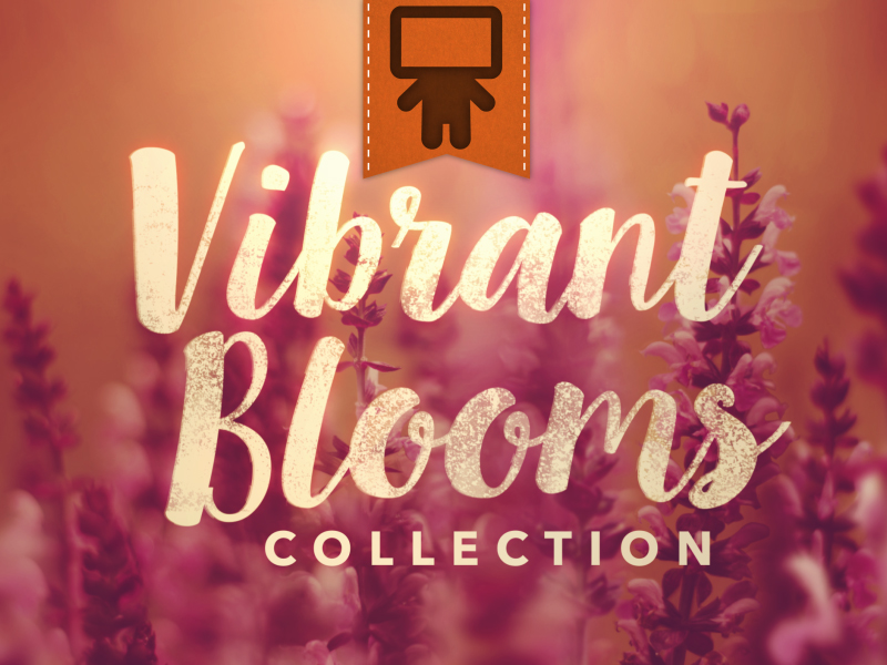 VIBRANT BLOOMS COLLECTION