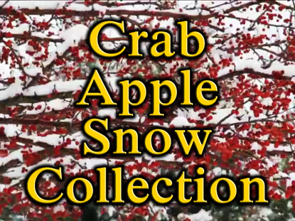 CRAB APPLE SNOW COLLECTION