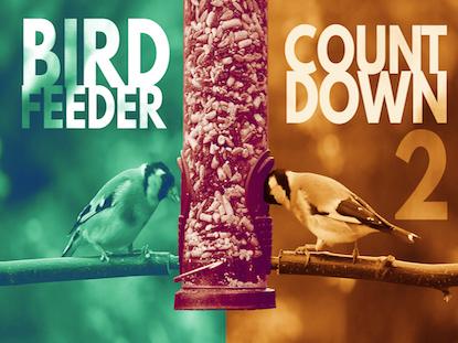 BIRDFEEDER COUNTDOWN 2