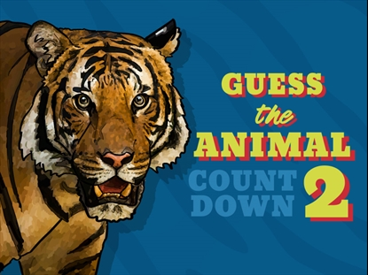 GUESS THE ANIMAL COUNTDOWN