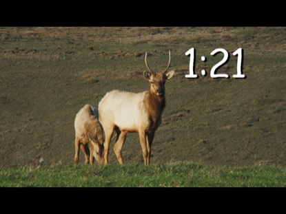 WILDLIFE COUNTDOWN 2