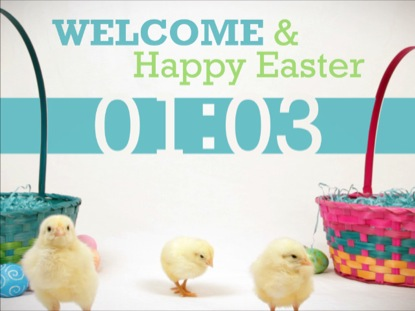 BABY CHICKS EASTER COUNTDOWN
