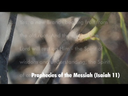 PROPHECIES OF THE MESSIAH  ISAIAH 11
